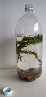 how to make an ecosystem in a bottle
